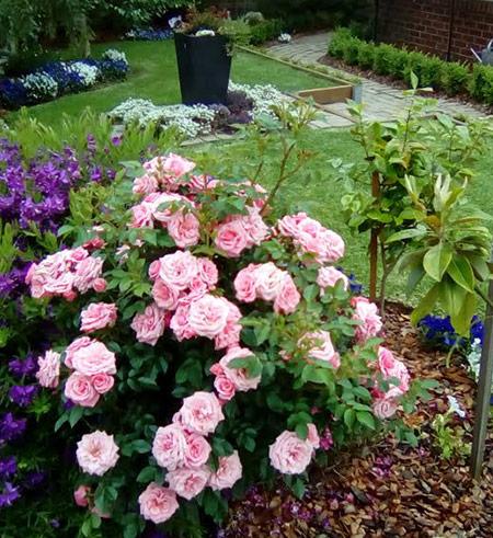 garden clean ups